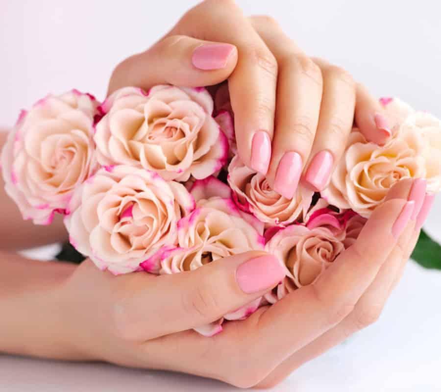 The Royal Roses® lückenlose Lieferkette