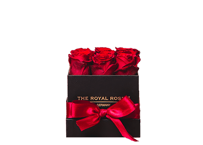 Royal Cube Box schwarz small