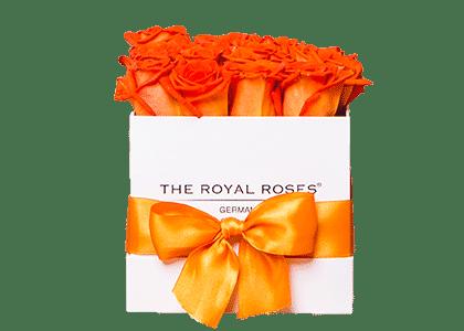 Royal Cube Box weiß medium