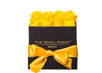 Royal Cube Box schwarz medium